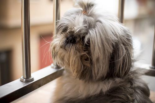 Elbo en el balcón | by PacoQT