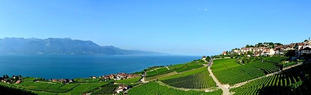 Lavaux, pays de vignes