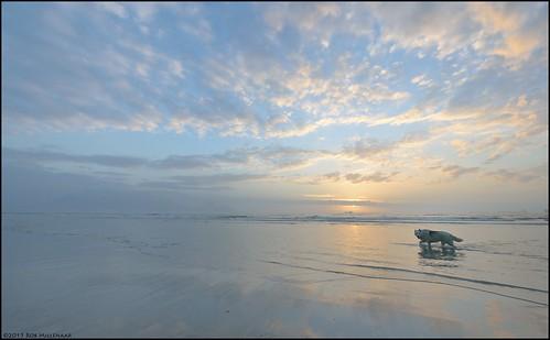 sunset dog beach landscape southafrica scenery milnerton westerncape