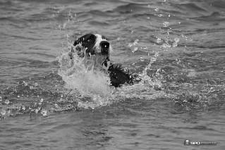Roggie makes a splash | by DSMSII