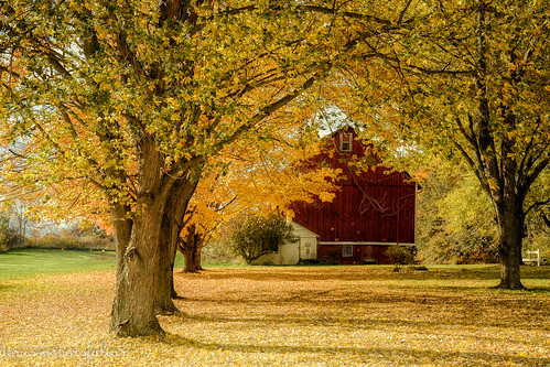 2016 autumn november fall leaves gold barn landscape building mogadore portagecounty outdoors nature onethousandgifts trees