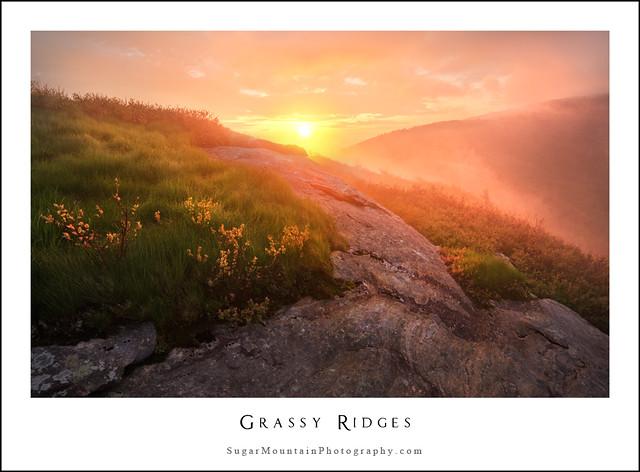 Grassy Ridges