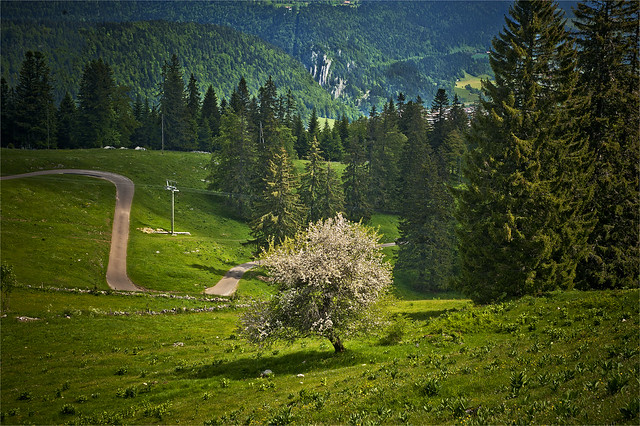 Swiss Spring Time  in Jura Mountains. June 15, 2013. No. 5427.