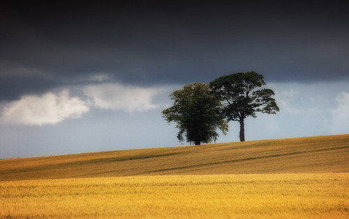 2c tree 5dmk2 ©2c ireland 72dpipreview cokildare kildare summer skyscape best ©lowresolutionpreview landscape sky flickr hugh dempsey