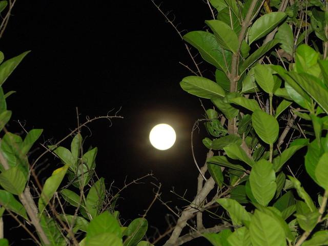 A super Lua / The super moon.