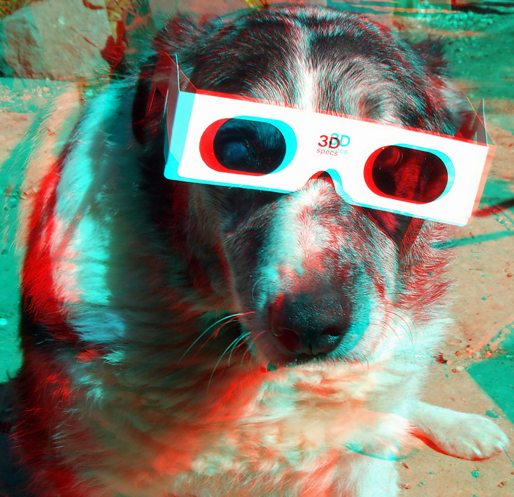 3d Dog 3d Anaglyph Red Blue Or Cyan Glasses To View Flickr