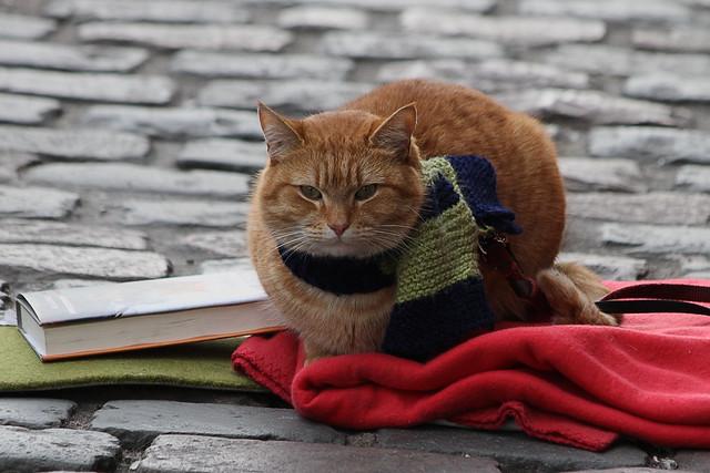 busker's cat