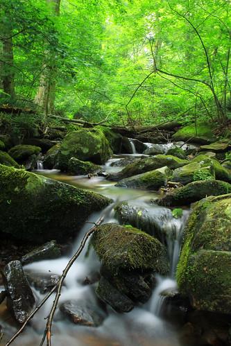 trees summer creek waterfall moss lowlight rocks stream hiking pennsylvania falls cascades creativecommons ravine deciduous lancastercounty lancastercountyconservancy textermountainnaturepreserve harnishrun lancasterconservancy