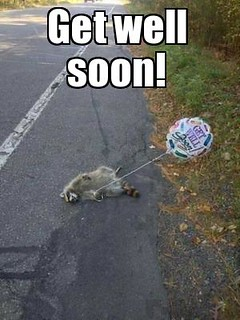 Get well soon Raccoon | by slapcaption