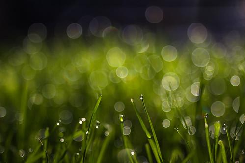 Morning dew | by Sorin Mutu