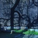 Soft shadows on fence