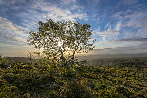 uk trees sky nature weather wales sunrise landscape shadows vista thegreatoutdoors hillwalking wildplants welshhills