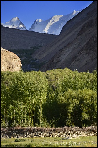 Afghan Wakhan: poplar culture protected   by an enclosure covered by thorny bush © Bernard Grua