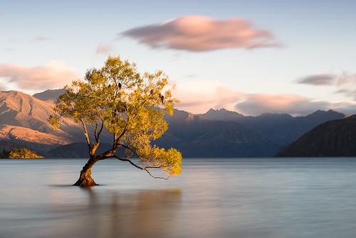newzealand lake tree sunrise lago árvore wanaka lakewanaka
