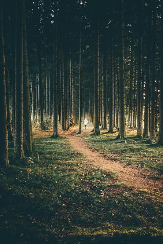 Waldläuferin