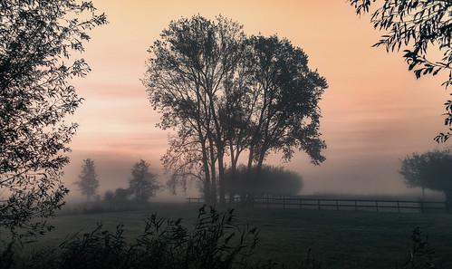 dawn fence fencefriday fogmist hff silhouette trees sunrise sundawn nederlandvandaag htmt treemendoustuesday