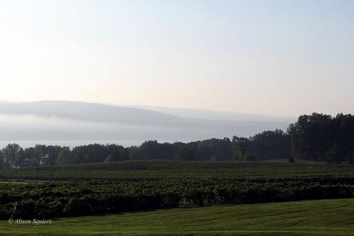 vineyard elements senecalake glenora