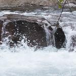 Rapids on McDonald Creek