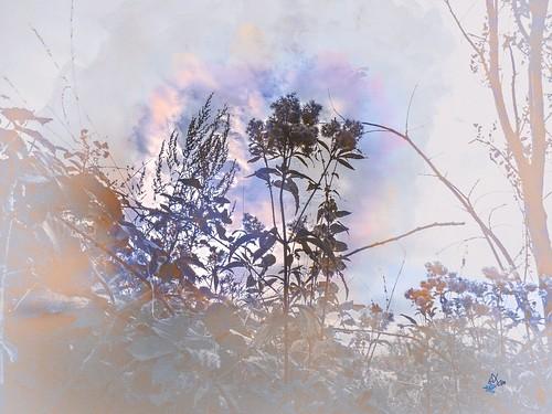 2016 - nature - Aquarelle | by bDom [+ 5,4 Mio views - + 68 K images/photos]