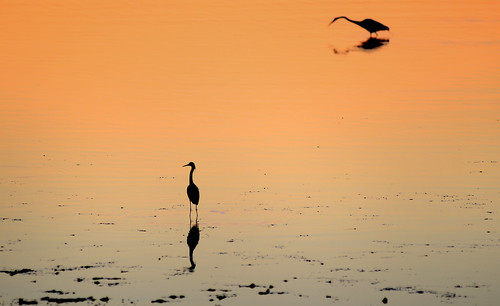 desktop morning pink wild wallpaper orange bird heron nature water beautiful beauty animal breakfast sunrise dawn bay duck newjersey peace background wildlife nj peaceful calm stunning jersey monmouthcounty lovely waterfowl egret tranquil avian desktopwallpaper placid desktopbackground raritanbay