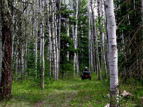 atv forest green laclahache path vista trail fun caribooarea tree landscape trees