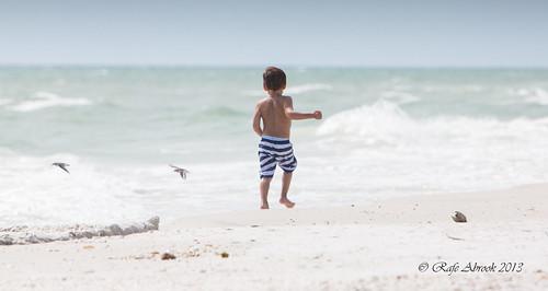 boy sea beach birds kids sand florida stripes running shore everglades marco whitesand sanderlings marcoisland tigertail tigertailbeach
