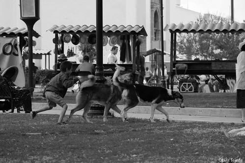 Foto no. 100. Niño jugando con perros.