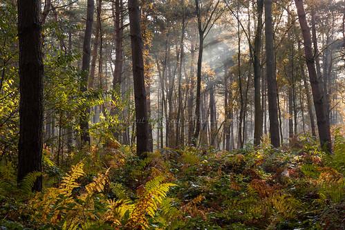 automne autumn fall lumière light lumièrenaturelle naturallight nature trees arbres forest forêt couleursdautomne autumncolours canon canoncamera canonlens canonef2470mmf4lisusm depthoffield profondeurdechamp