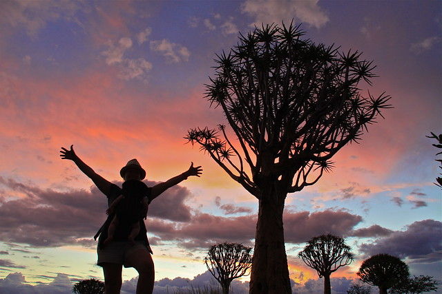 Silhouette, Quiver tree, Namibia