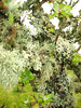 Mossy Tree by Boffin PC