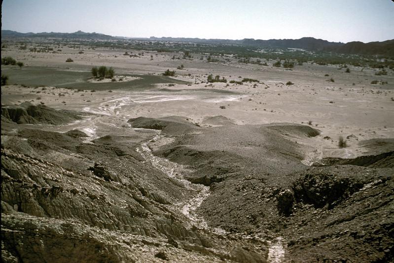 Sotka Koh 1992