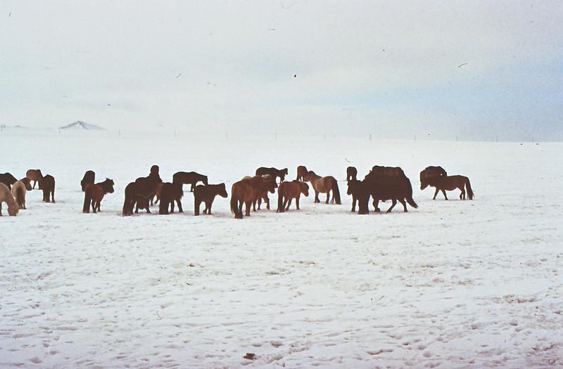 MONGOLIA 1994 01-0011
