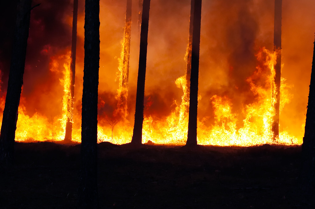 criminal forest fire