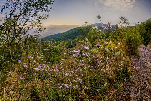 flowers sunset canon hiking northcarolina f10 815 appalachiantrail greatsmokymountainsnationalpark shuckstack canoneos5dmarkii ef815mmf4lusm canonef815mmf4lusm