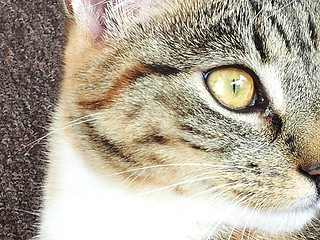 Cat portrait. | by Stella Trooster, Photography is life.