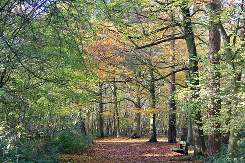 Autumn at Thorndon Country Park | by Julie A1
