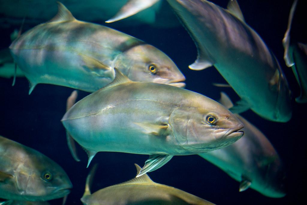 Pesci fotografati per un concorso di fotografia