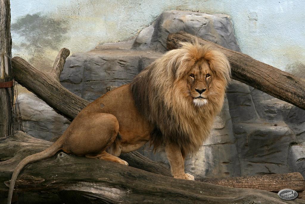 Zoo Aussig