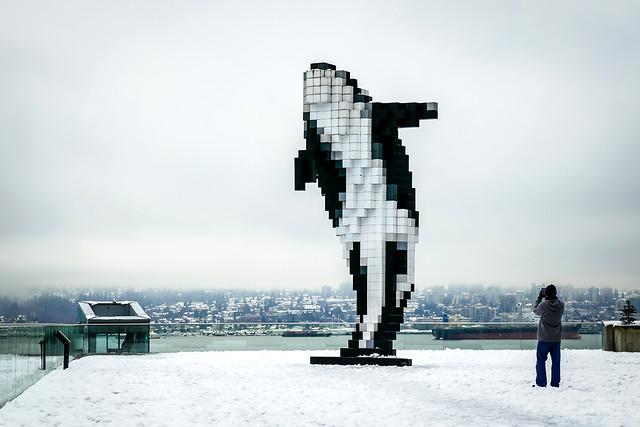 Orca on the Snow