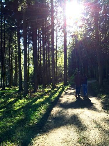 light tree walking licht woods outdoor landschaft wald baum spaziergang iphone6