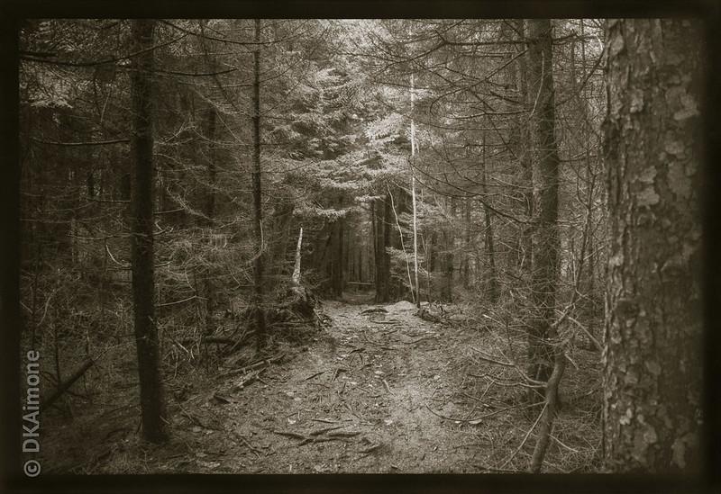 Monhegan Woods