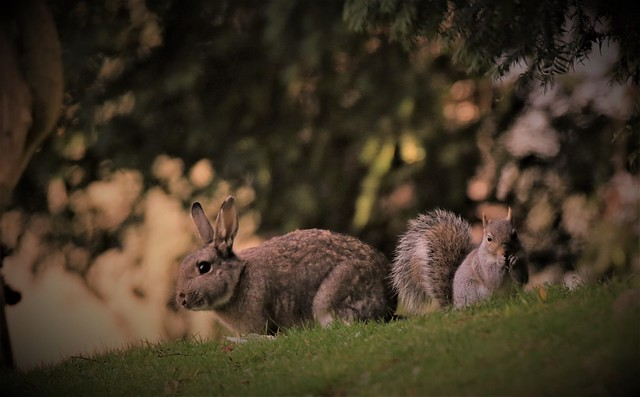 Peter Rabbit & Squirrel Nutkin ??