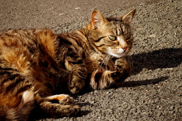 Tabby cat on Tyldesley Street in Moss Side, Manchester