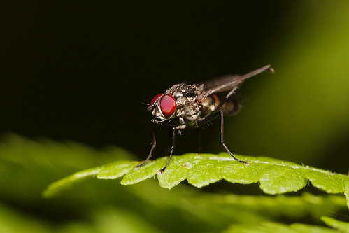 Fly Macro 02 | by Mike G Photos