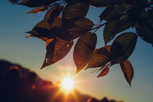 sunrise dawn voigtlander olympus chiayi nokton 阿里山 嘉義 f095 日出 祝山 ep5 425mm