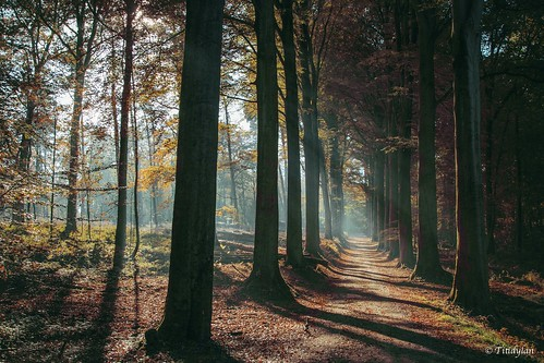 calme ombres trees landscape canonef24105mmf4lisusm
