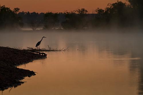 morning mist lake bird heron fog sunrise reflections landscape dawn colorado wildlife chatfieldlakestatepark