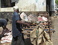 Daily catch at the fish market in Stone Town, Zanzibar, Tanzania. We'd visit the fish market 4-5 times a day to see the catch.