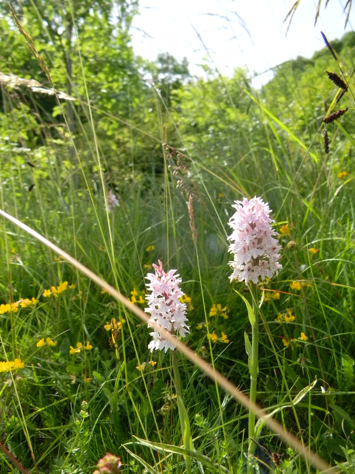 Orchids Hassocks to Brighton