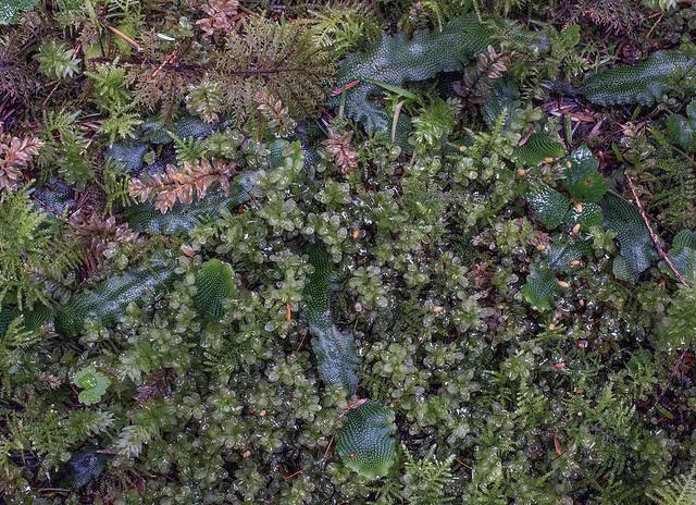 bryophyte garden